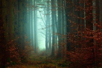 Obudź swoje zmysły i zasmakuj tajemniczej kuchni lasu