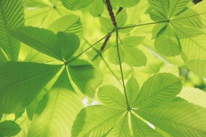 Nosalowy Dwór Resort & SPA stawia na ekologię