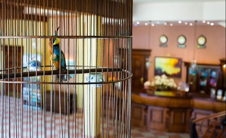Hotel *** Hotel Ognisty Ptak / 5